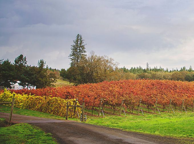 Delfino Vineyards.