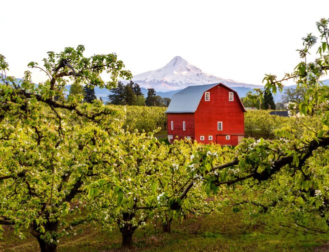 Near a little red barn nestled among the 100 acres of fruit trees in Hood River, Oregon, live Jon and Debra Laraway. The region's temperate climate of warm days and cool nights, combined with its rich, volcanic ash soil fed by mountain streams and coastal air, is a perfect recipe for Bartlett, Green Anjou, Red Anjou and Bosc pears.