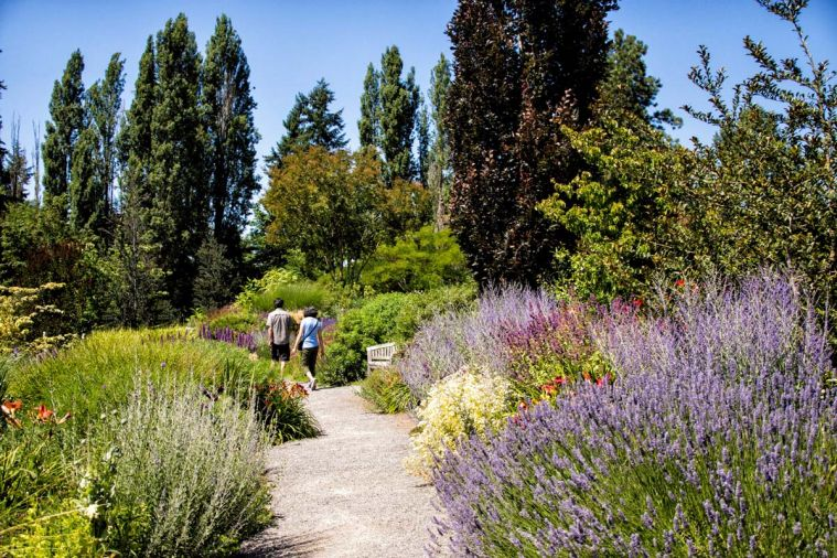 Bellevue Botanical Garden has 53 acres of cultivated gardens, woodlands and wetlands, with free admission.