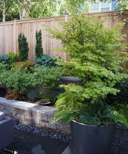 Container plantings add layers of seasonal interest as well as host foundational plants like this Japanese maple.