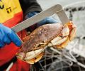 A fishing license is required for shellfish, including crabs and clams.
