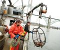 "The crew uses a ""winch"" to pull up the crab pots, which weigh anywhere from 60 to 125 lbs and measure 36"" to 48"" in diameter. The average boat fishes 300- 500 pots in depths of 5-100 fathoms (30 to 600 feet) of water."