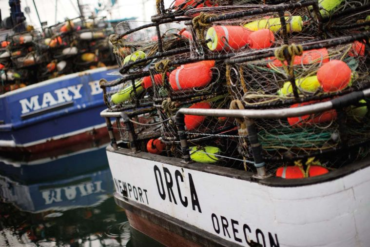 "The Dungeness crab fishery continues to make the ""green light"" category in guides such as the Monterey Bay Aquarium Sea Watch for sustainability initiatives."