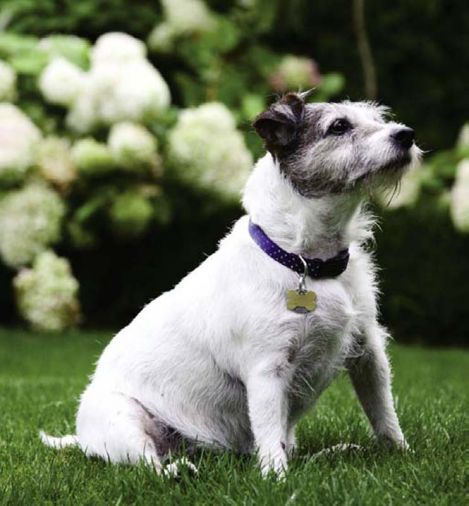 """Snack,"" the couple's fourteen-year-old Jack Russell Terrier, has free run of the gardens. Good thing, because she's got a lot of energy to burn."