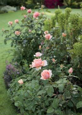 The garden&rsquo;s gravel edges merge into stone paths leading to planting beds down the east-facing hillside, where long-blooming sun-lovers like <em>Rosa chinensis</em> &lsquo;Mutabilis&rsquo; thrive.