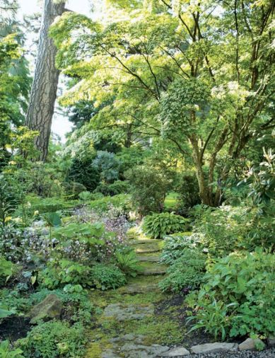 The area known as &ldquo;the grotto&rdquo; was installed by Susan to solve a lawn maintenance problem: too much shade and compacted soil. Why force lawn where it doesn&rsquo;t want to be? The stone path is flanked by shade-loving plants including saxifrage, several hostas, Lenten roses (<em>Helleborus x hybridus</em>), and Susan&rsquo;s new collection of <em>Arisaema calsoital</em> species.