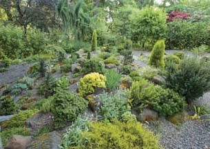 Susan Bates has taken the opportunity to enlarge the too small rock garden, adding choice miniature conifers from local sources. She has also found dwarf rhododendron species that appreciate the morning sun and afternoon shade.