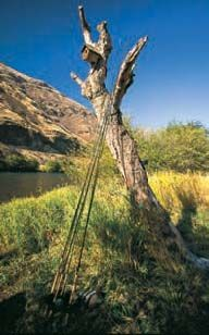 Rods leaning against a birdhouse during an Emerald Water Angler camp – a good selection never hurts.