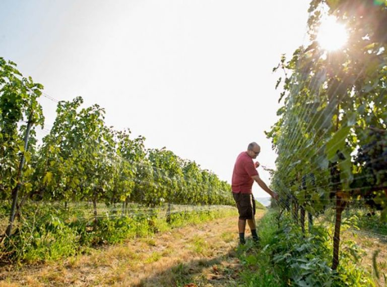 Located in southeastern Washington and straddling the border between Washington and Oregon, the Walla Walla Valley AVA (American Viticultural Area, or wine appellation) was established in 1984.