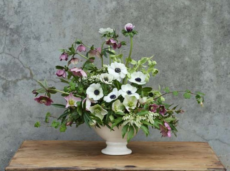 Use this flower guide to recreate this arrangement from floral designer Kailla Platt: 2 Stems Andromeda Pieris japonica, 5 Stems Hellebore Helleborus x orientalis (three colors pictured), 7 Stems Anemone Anemone coronaria 'Carmel White,' 7 Stems Sierra Laurel Leucothoe davisiae, 2 Stems Flowering Currant Ribes sanguineum, 4 Stems Dwarf Sweetbox Sarcococca hookeriana humilis, 2 Stems Bearsfoot Hellebore Helleborus foetidus.