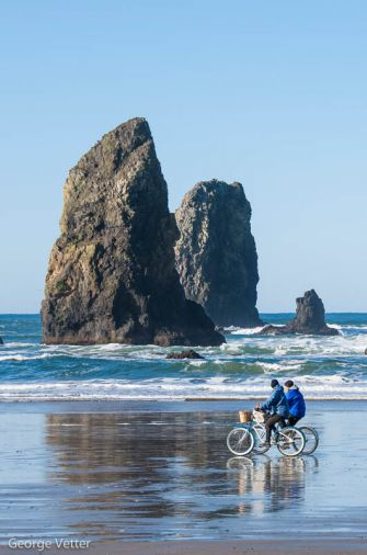 The iconic basalt sea stacks that line Cannon Beach are rich with marine birds and intertidal creatures.