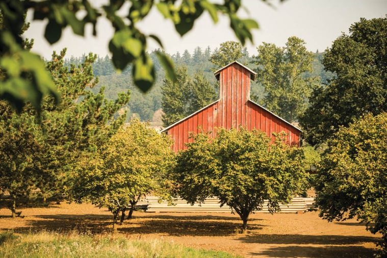 Oregon's hazelnut farmers are entering a golden age of full harvests, strong orchards, and industry vitality almost unimaginable a generation ago.