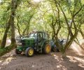 Hazelnut trees are planted with very wide spacing, and farmers carefully tend the ground beneath to keep it in good shape for the harvesters. Orchard ground needs to be firm, flat, and tightly mown to maximize sweeper efficiency.