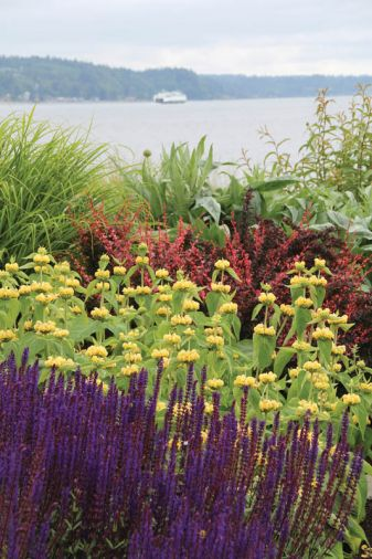 Vibrant plants like salvia and barberry contrast strikingly against the soft grey of Puget Sound.