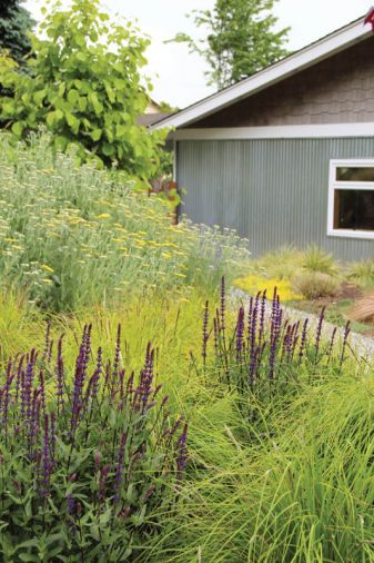Tish loves to use soft grasses like Sesleria autumnalis in plantings to soften the edges of perennial plantings.