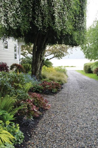 Behind, Carex oshimensis 'Evergold' softens the edge of the gravel driveway.