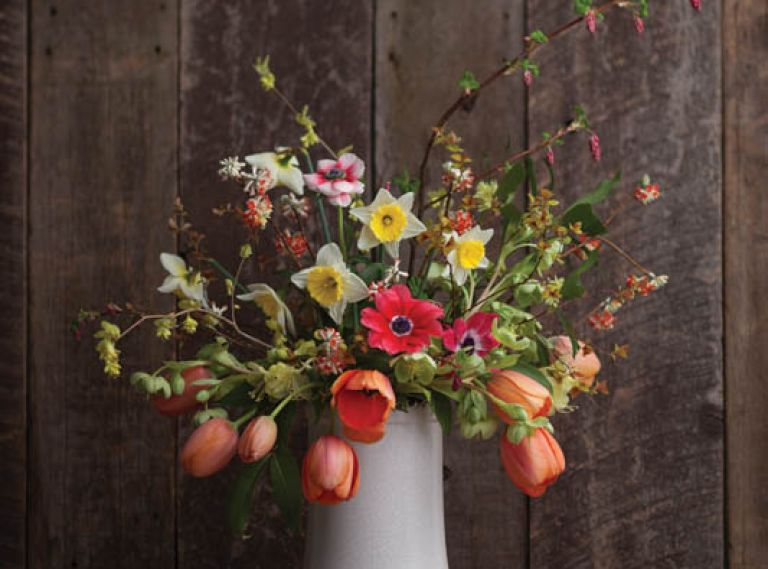 A BUTTERCUP WINTERHAZEL & FLOWERING CURRANT BOUQUET – THE STEMS YOU'LL NEED: 8 Tulipa 'Apricot Impression,' 3 Edgeworthia chrysantha 'Akebono,' 2 Rhododendron lutescens, 2 Illicium anisatum, 3 Helleborus argutifolius, 3 Anemone coronaria, 1 Ribes sanguineum, 3 Corylopsis pauciflora, 3 Spirea japonica 'Goldflame' foliage, 6 Narcissus 'Silver Standard.'