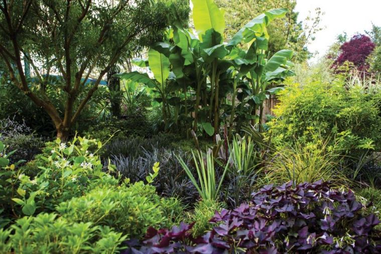 Lauren relies on foliage rather than flowers for interest and texture, which keeps the garden looking lush longer.