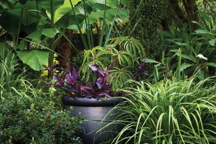 Pots are filled with annuals like Wandering Jew (<i>Tradescantia pallida</i> &lsquo;Purple Heart&rsquo;), Grass Aloe (<i>Aloe cooperi</i>), and Palm Leaf Begonia (<i>Begonia luxurians</i>).